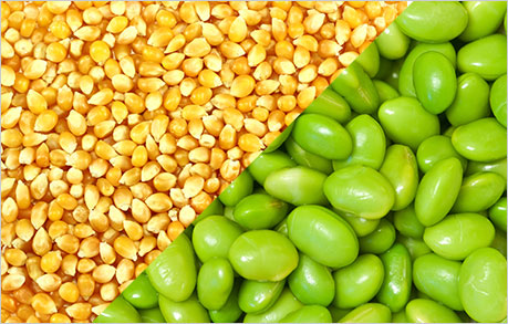 USDA launches first price report on non-GMO corn and soybeans